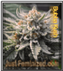 Bubba Kush Just Feminized Mix & Match Seeds
